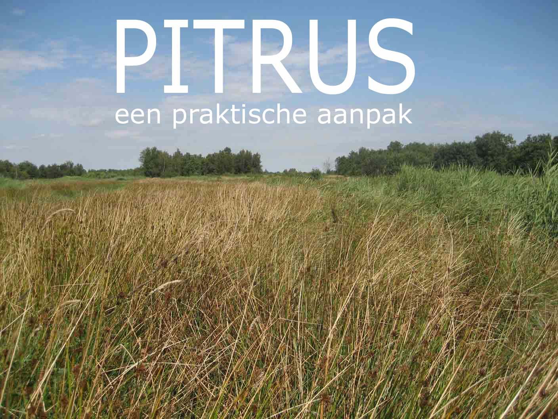 Pitrus therapie
