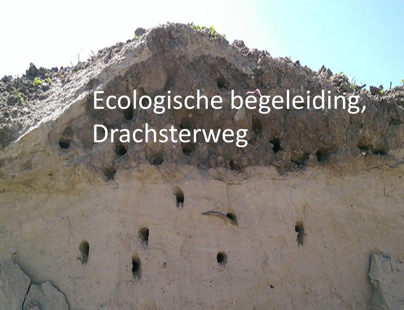 Ecologische begeleiding, Drachsterweg