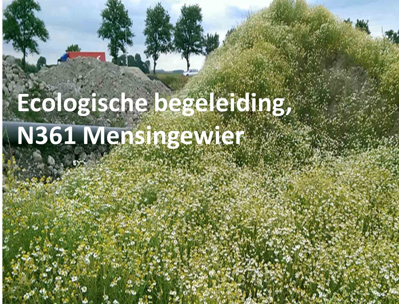 Ecologische begeleiding, N361 Mensingewier