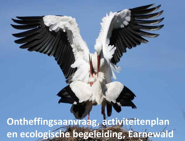 Ontheffingsaanvraag, activiteitenplan en ecologische begeleiding, Earnewald