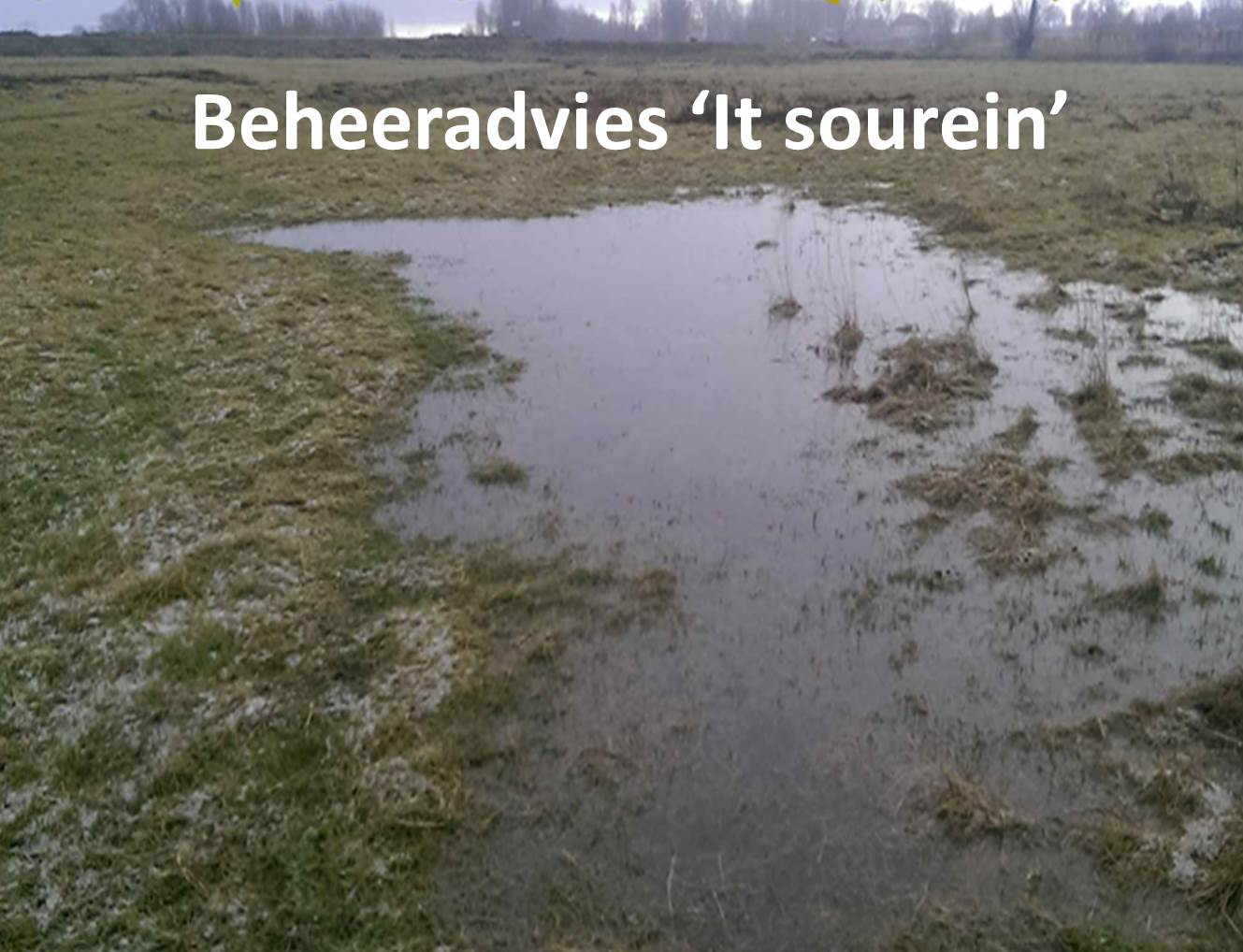 Beheeradvies 'It Sourein'