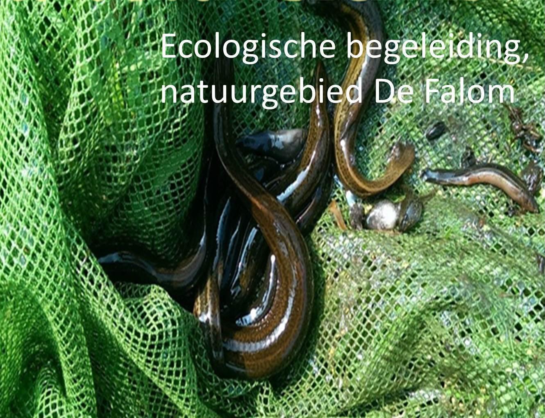 Ecologische begeleiding, natuurgebied De Falom
