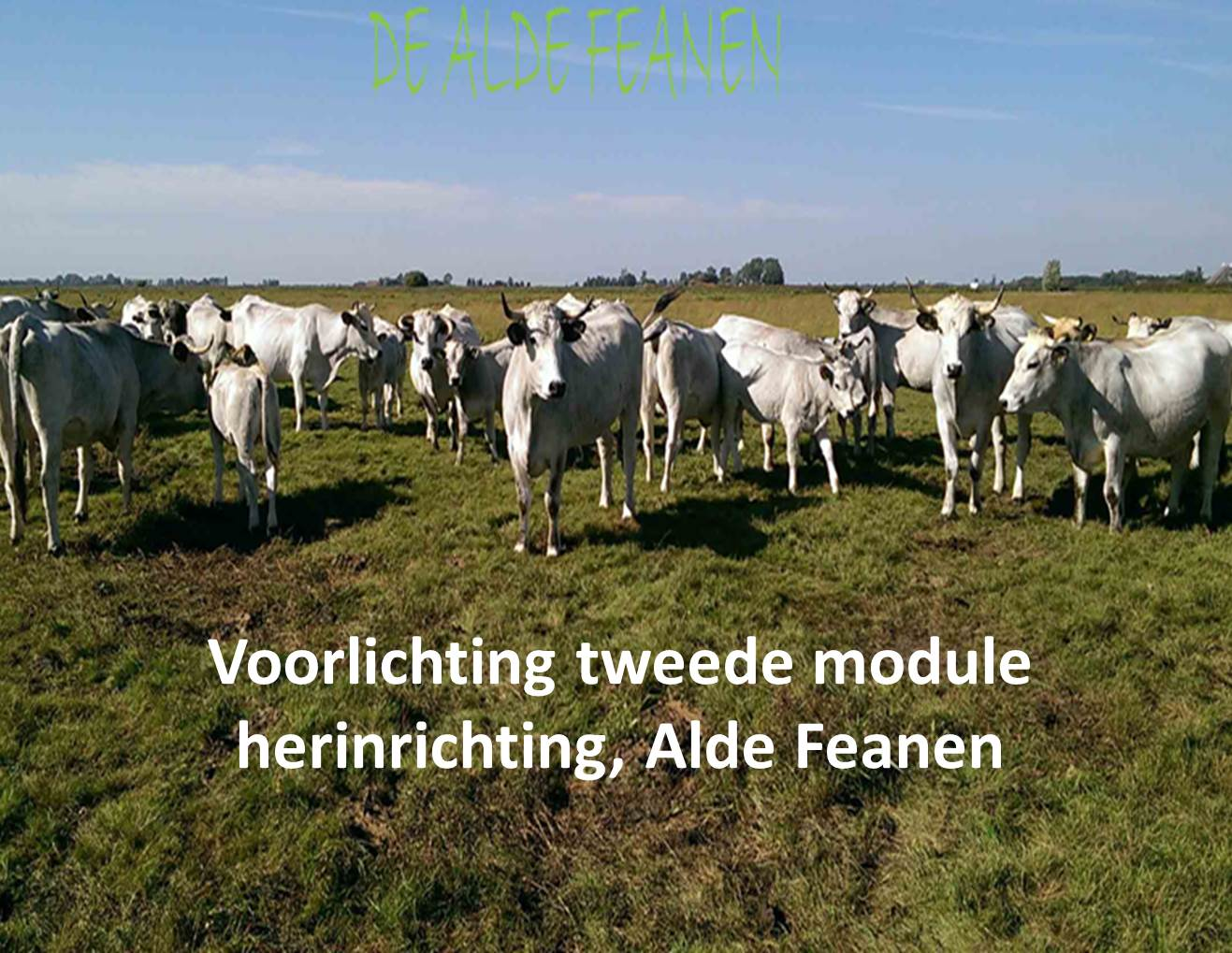 Voorlichting tweede module herinrichting, Alde Feanen